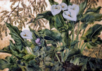 """CALLA LILIES"", Watercolor & 23K Gold Leaf on Paper, 22""x30"", 1975-76"