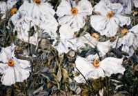 """MATILIJA POPPIES"", Watercolor & 23K Gold Leaf on Paper, 22""x30"", 1975"