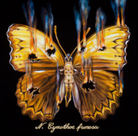 """""""THE BUTTERFLY PROJECT #1, N. Cymothoe fumosa"""" Oil and 23 K Gold Leaf on Panel, 13"""" x 13"""""""