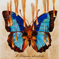 """THE BUTTERFLY PROJECT #10, N. Prepona subomphale"" Oil and 23 K Gold Leaf on Panel, 13"" x 13"""