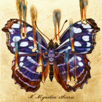 """THE BUTTERFLY PROJECT #2, N. Myscelia ethusa"" Oil and 23 K Gold Leaf on Panel, 13"" x 13"""