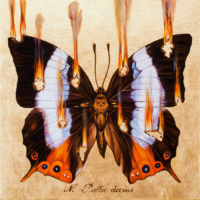 """""""THE BUTTERFLY PROJECT #24, N. Palla decius"""" Oil and 23 K Gold Leaf on Panel, 13"""" x 13"""""""