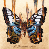 """THE BUTTERFLY PROJECT #4, N. Parthenos sylvia"" Oil and 23 K Gold Leaf on Panel, 13"" x 13"""